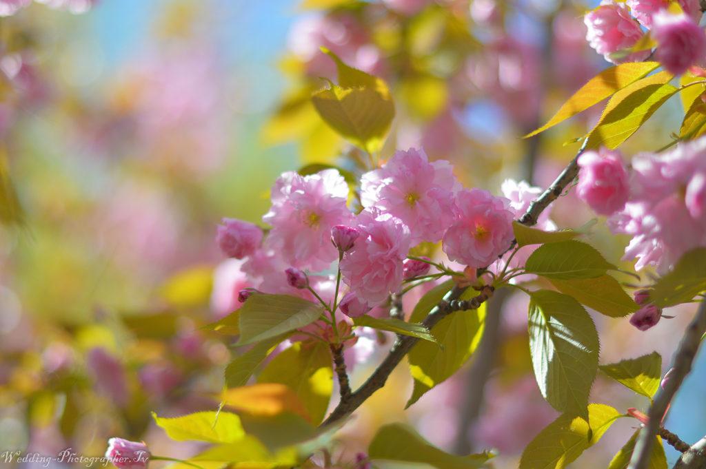 Фото весна